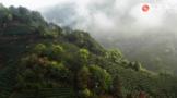 """纪录片《一叶茶千夜话》还原中国""""茶""""世界"""