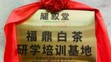 非遗加持·艳惊四座   龙叙堂福鼎白茶研学培训基地正式成立