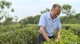 为英德红茶事业奉献一生的时代楷模袁学培