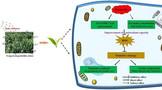 Environmental Pollution:纳米硒对茶树叶片氧化应激的潜在影响