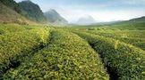 怡清源绿茶季,春茶的四时与四鉴,教你如何选好茶