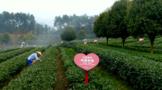 贵ub8用户登录十佳茶企:湄潭兰馨茶业