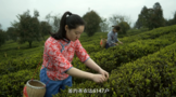 贵ub8用户登录十佳茶企:湄潭阳春白雪茶业