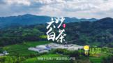 福山福水出福茶  《六妙白茶》宣传片亮相东南卫视、福建综合频道