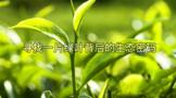 闯入一座茶山 寻找一片绿叶背后的生态密码