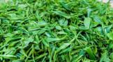 一杯香茗难再寻?研究显示全球变暖或严重威胁茶叶种植