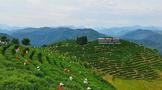 ub8用户登录平利县被认定为陕西省首批省级现代农业产业园