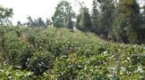 普洱市茶产业发展ub8用户登录作专班第一次会议召开