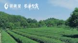 风华正茂(2001-2021)的武夷星,生态篇