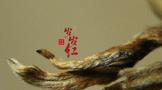 逢中秋,蒲门茶业新品岁岁红·老树金芽倾情上市