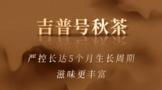 吉普号第9年秋茶预售:兼具实力与性价比,2021秋韵系列上新
