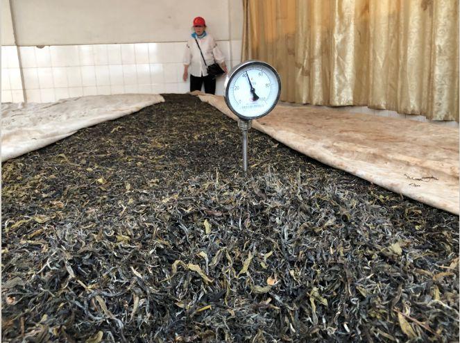 解读   关于普洱熟茶发酵你了解多少?