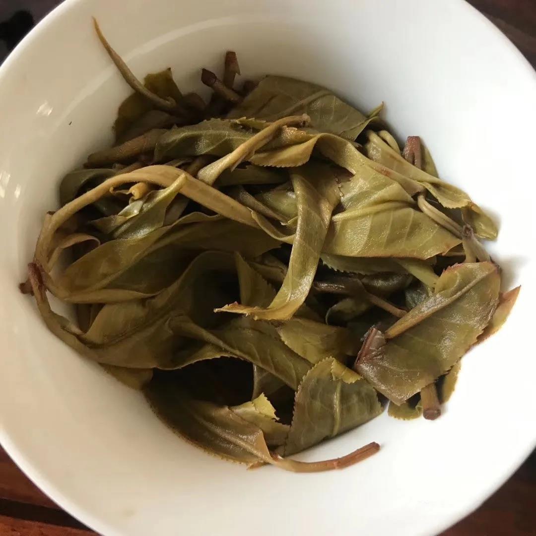 从叶底鉴别普洱茶的古树与台地
