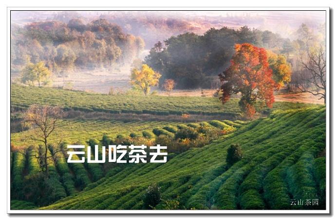河南新县云山吃茶去