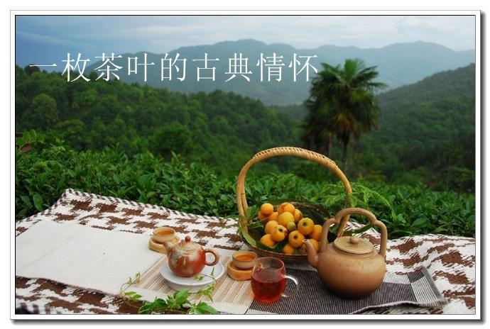 一枚茶叶的古典情怀