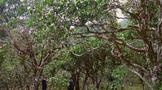 勐海茶区古树茶为什么会受到追捧?