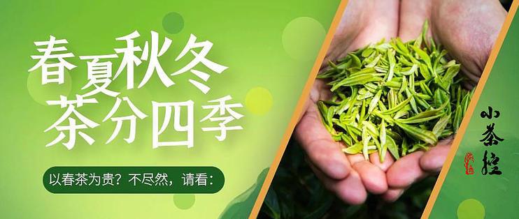 以春茶为贵?不同季节造就风味各异 春冬秋夏茶叶的基本特点浅析