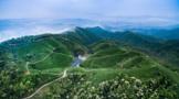 紫金蝉茶,滴落山中的甘露 (三章)