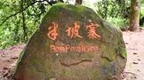 深度寻访茶树王之乡丨南糯山十二寨之半坡老寨