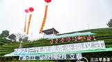 三江早春茶开采  为中国叫醒春天 :广西三江侗族自治县举办早春茶开采节