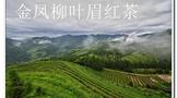 金凤柳叶眉红茶