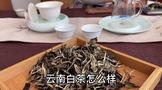 云南白茶怎么样,有什么特征?