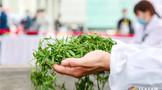 """大美黄山·""""茗""""震天下:2021中国(黄山)茶业发展大会邀您共品中国名茶"""