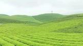 """锐评:一年一度的""""假大空""""盛会到底能为中国茶产业带来什么?"""