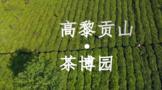 高黎贡山茶博园