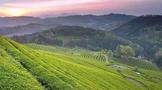 茶叶是打通人体经络的最好食品?茶界伪科学为什么总有市场