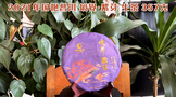 2021年国艳普洱境界系列紫芽生茶357克