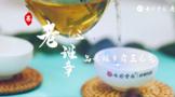 2021寻茶记深度视频丨专家茶人探山识茶——老班章③