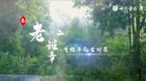 2021寻茶记深度视频丨专家茶人探山识茶——老班章②