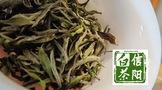 """信阳白茶,茶香氤氲处,尽是""""诗和远方""""?"""
