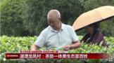 贵州遵义:茶旅一体美生态富百姓