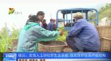 镇沅:发放人工驯化野生古茶苗 优化保护区茶产业结构