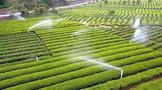 终于,贵州700万亩茶园面积的牛皮吹破了