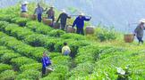 湖南省安化县黑茶产业核心竞争力提升研究