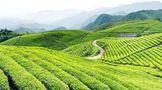 """湖心岛茶获得湖南省第八届""""湘茶杯""""名优茶评比金奖"""