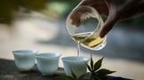喝茶,第几泡最好喝?