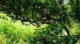 云南省茶叶流通协会倡导:古树茶竞价交易需规范
