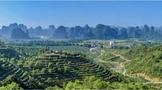 广州日报 刊登英德文旅专题:茶香绕英德,醉在山水间