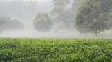 英茶王 谷雨茶:正好清明连谷雨,一杯香茗坐其间