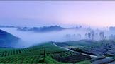 促进雅茶产业稳步发展关键要找亮点,破难点!