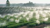 探访川茶品比园:开展茶树栽培试验,助推茶产业发展
