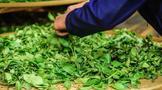 武夷岩茶焙火和做青究竟哪个更重要?