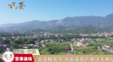 安溪秋茶节,为安溪茶产业注入新动能!