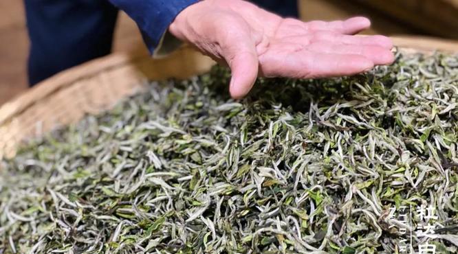 列入国家非遗名录,福鼎白茶的传统技艺精髓在哪里?