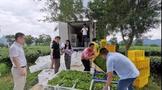 茶鲜叶保鲜贮运技术研究现状及其展望
