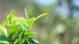 茶书推荐 《茶·高效栽培与加工技术》